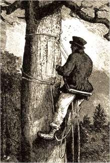 Bartnik na drzewie (www.wigry.win.pl)