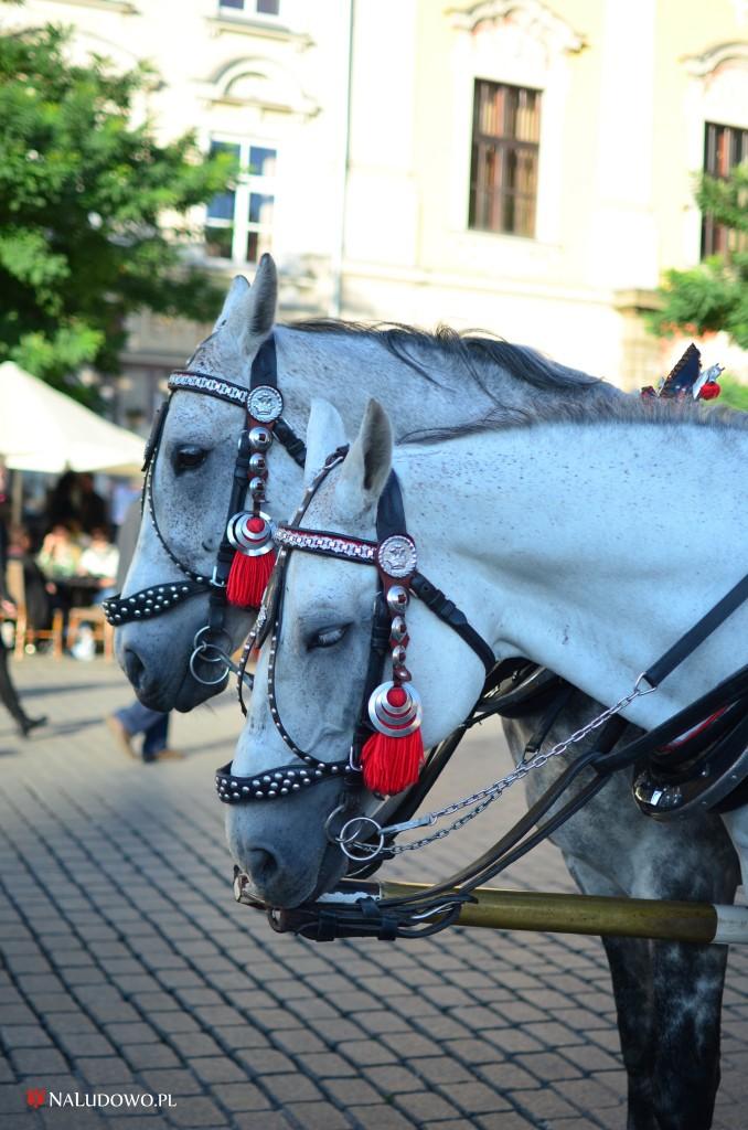 Koń w kulturze ludowej (fot. Magdalena Armata)