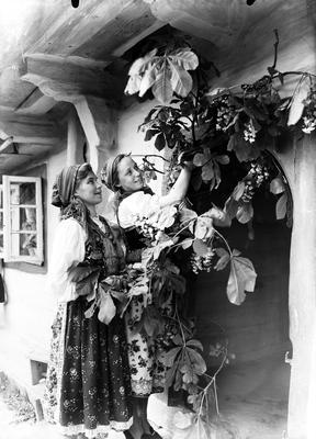 Przyozdabianie (majenie) domów na Zielone Święta w Bronowicach, 1930 rok.  (www.audiovis.nac.gov.pl)