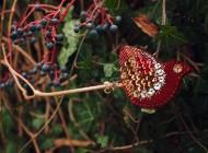 Ooliku – biżuteria, która powstała z połączenia filcu i miłości do sztuki ludowej