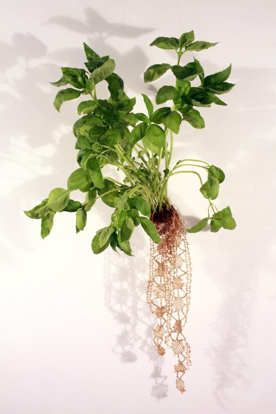 Carole Collet - koronka z korzeni bazylii