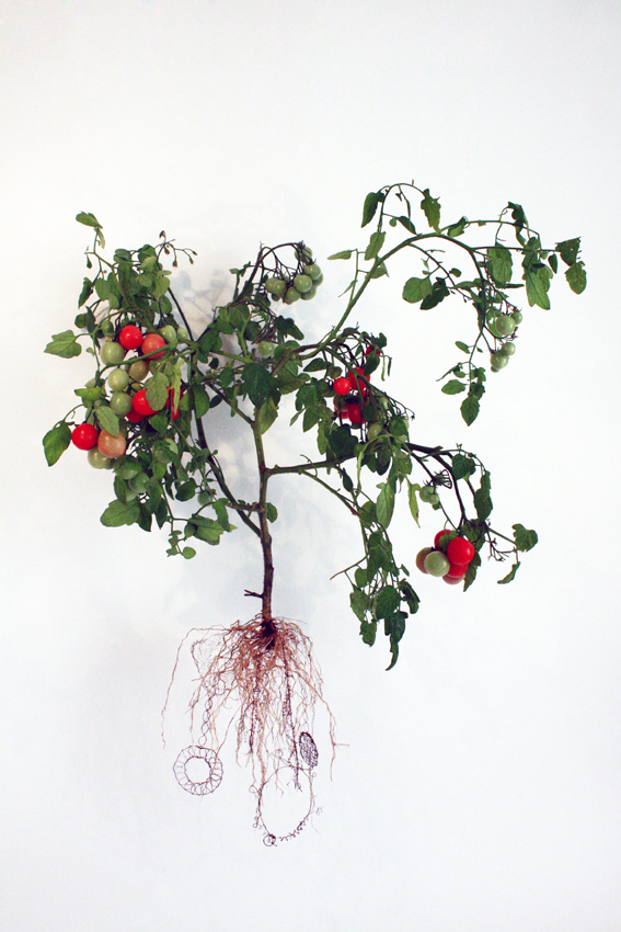 Carole Collet - koronka z korzeni pomidora