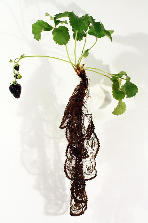 Carole Collet - koronka z korzeni truskawki