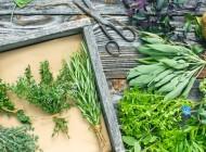 Rośliny zielarskie dawniej i dziś